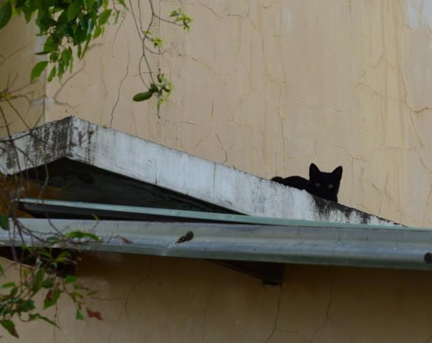 屋簷上的黑貓