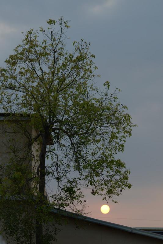 樹+夕陽3