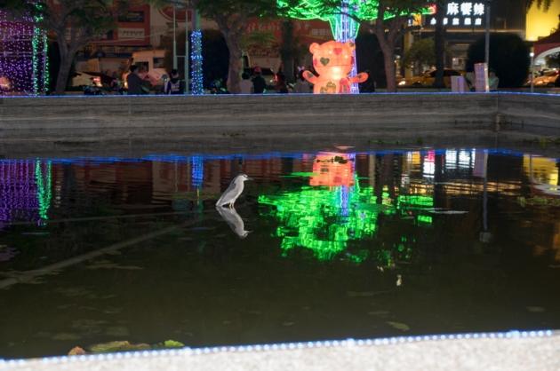 鳥+水池夜景